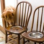 Every Dog Has His RecycleDay!